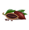 realistic raw and dry cocoa thee pods beans and vector image vector image