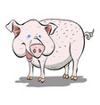 cartoon image of pig vector image