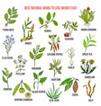 best natural herbs for fast lose weight vector image vector image