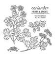 coriander set vector image