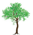 isolated summer green tree vector image
