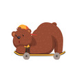 skateboarder bear riding on skateboard in lying vector image vector image
