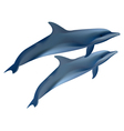 two dolphins on white background vector image