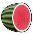 Water melon isolated on white background vector image vector image