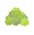 bunch cabbage lot of vegetables big crop on farm vector image vector image