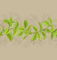 stevia frame vector image vector image
