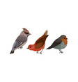 feathered birds or aves as warm-blooded flying