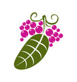 flat green leaf with tendrils and purple seeds vector image vector image