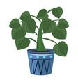 indoor plants in pots decoration nature vector image vector image