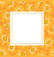 orange yellow cosmos flower banner card vector image vector image