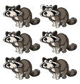 raccoon with different expressions vector image vector image