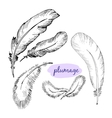 set of sketch plumage vector image