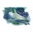 Shark watercolor painting vector image