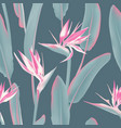 south african tropical flower seamless vector image