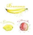 watercolor fruit set with blots vector image vector image