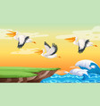 pelican flying on the sky vector image vector image