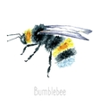 Watercolor Bumblebees isolated vector image