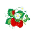 Strawberries hand draw cartoon vector image