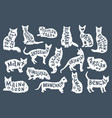 16 hand drawn lettering with breeds in cats vector image