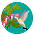 bleeding heart flowers and hummingbird isolated vector image vector image