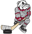 bull dog hockey logo mascot vector image vector image