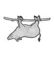 carrying dead boar on hunt sketch engraving vector image vector image