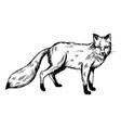 fox animal engraving vector image