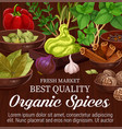 herbs spices and vegetables vector image vector image