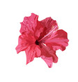 isolated red hibiscus tropical plant hand drawn vector image vector image
