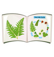 book of fern life cycle vector image vector image