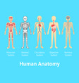 cartoon color human anatomical system card poster vector image vector image