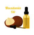 macadamia oil cosmeticscartoon flat style vector image vector image