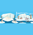 many animals in the north pole vector image