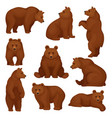 flat set of large bear in different poses vector image vector image