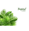 realistic tropical leaves exotic vacation vector image vector image