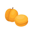 flat design of two whole apricots tasty vector image vector image