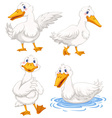Four ducks in different poses vector image vector image