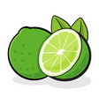 fresh lime fruit vector image