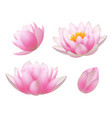 lotus flowers realistic beautiful plants flowers vector image