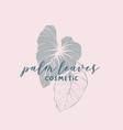 palm leaves cosmetic logotype template vector image