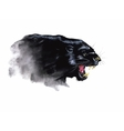 Panther hand painted watercolor vector image vector image