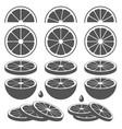 set of lemon lime orange or grapefruit slices vector image vector image