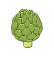 hand drawn icon of green fresh artichoke vector image vector image