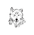hand drawn wolf vector image vector image