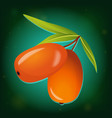 sea buckthorn with leaves icon vector image vector image