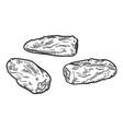 sketch - date fruit phoenix dried fruit vector image vector image