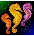 Seahorses vector | Price: 3 Credits (USD $3)