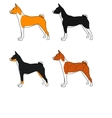 set of dogs basenji breed all colors vector image