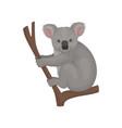 cute gray koala sitting on tree branch australian vector image