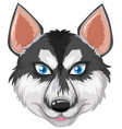 face of siberian husky vector image